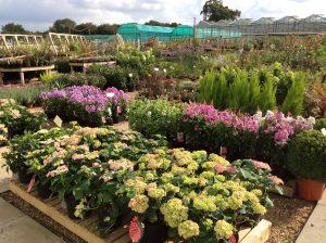 Immagine Vivaio Piante da Giardino