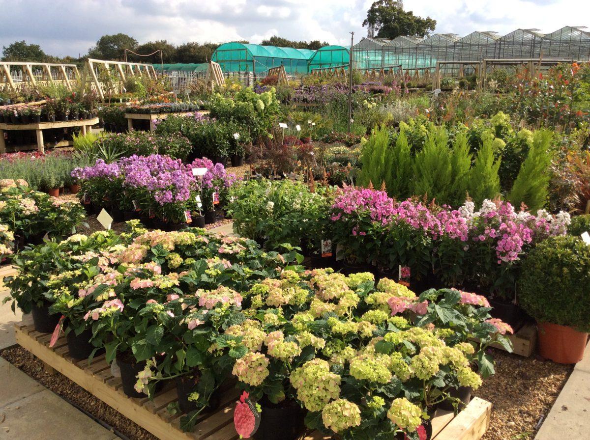 Piante Piccole Da Giardino vivaio: alla ricerca di piante da giardino - boschi di sicilia