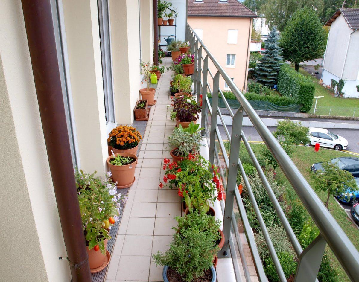 Composizione Vasi Da Balcone piante da interno ed esterno (giardino e balcone) - boschi