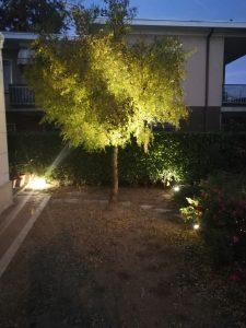 Illuminazione Alberi Tronco e Chioma